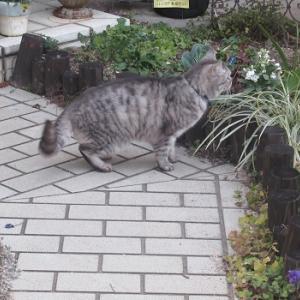 もう咲いた⁈とネコと庭パト