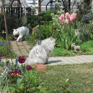 庭とネコと観光地