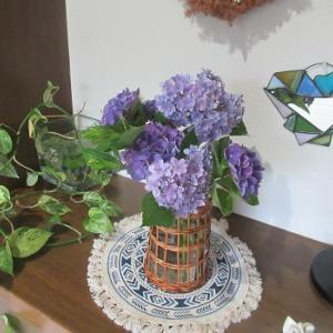 紫陽花とネコとポーチュラカ!?