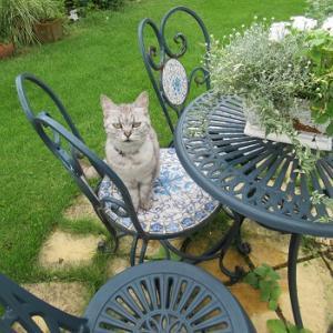 猫と庭仕事