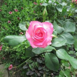 育つ花と育たない花