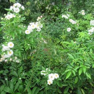 緑に映える白い花とネコ