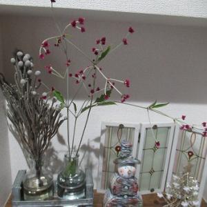パクチー好きとカットした花と今日の花