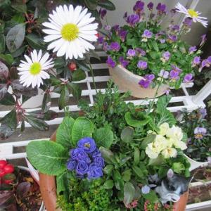 寄せ植えと沖縄からの贈り物
