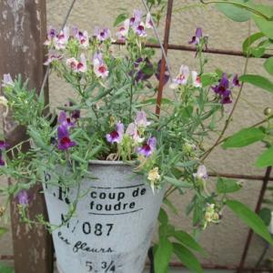 今日のお花と家仕事