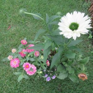 バラとホワイトコーナーの花