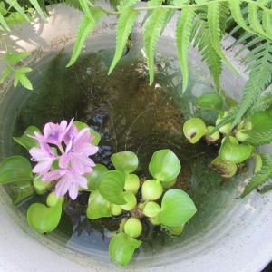 水辺の花とマンゴー届く