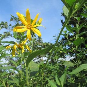 夏は夏の花が良い