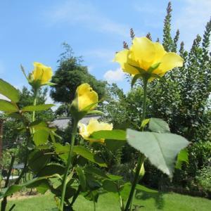 ど根性の花とワンコの性格