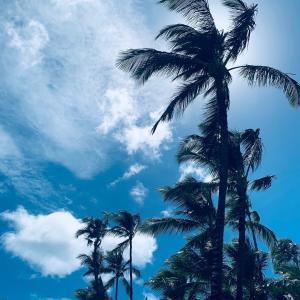 ハワイ カイムキにあるVegan Hills(*´∀`)♪