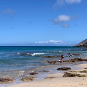 イルカを求めてワヒアワ地区のビーチへ(゚∀゚)