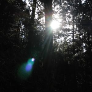 2021年2月~世界のフラワーエッセン季節のお勧め 第3番目の聖なる光の裏技 光と闇の根っこ