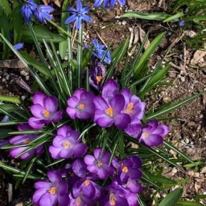 春の花達の画像が届きました