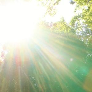 2021年6月~8月の季節のお勧め ジシバリの裏技・・・輝く人の輝きを倍増する