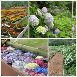 花で季節を楽しむ@あきる野市あじさい観賞