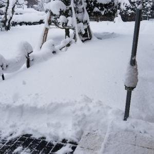 雪が降っても…。