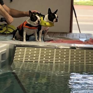 プールで落ちそうになる