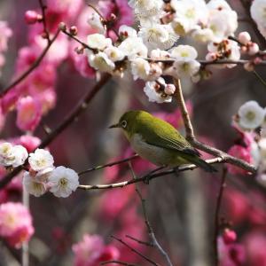 花鳥休日 1