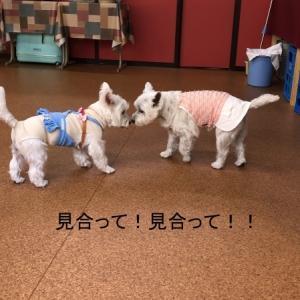 10月白犬会、飛びます飛びます
