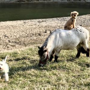 河原の乗馬倶楽部