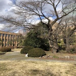 大学構内の冬枯れ散歩