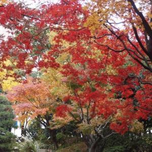 2019年横浜公園の紅葉