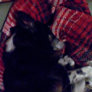 母親犬の寝顔