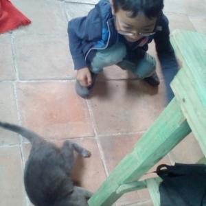 仔猫と遊ぶ息子 フランクの日課