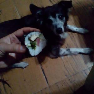 母親犬・フランク☆初お寿司