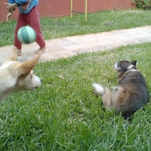 母親犬とフランク