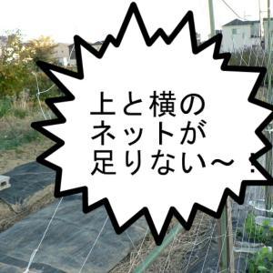 エンドウ豆のネット張り