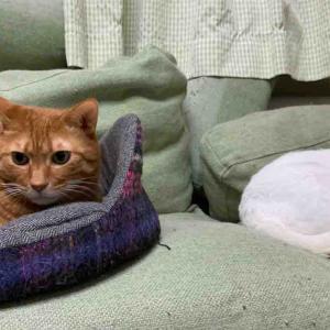 ジャンボ子猫とシニア子猫 20191014