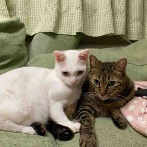 仲良くケンカする猫たち 20191016