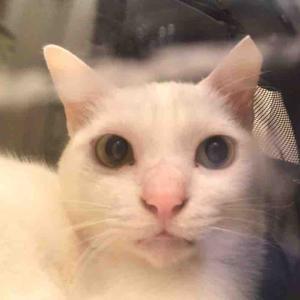猫をかぶるウチューネコチャン