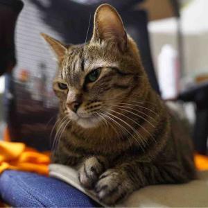 キメ顔の次男坊猫 20200109