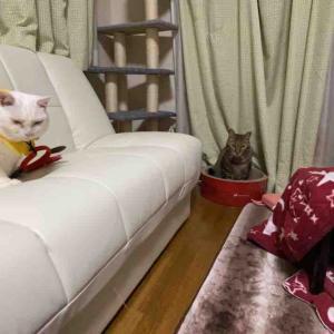 猫たち全員集合の一枚 20200110