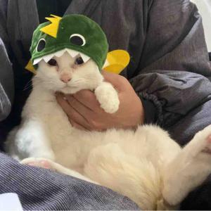 被り物猫ブラザーズ 20200112