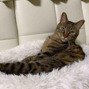 季節の変わり目の猫の通院 20200223