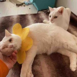 珍妙白猫たちの午後 20200224