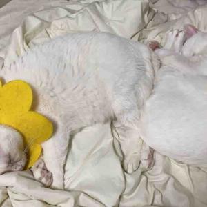 プロ子猫の貫禄 20200331