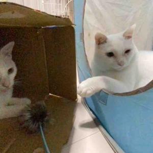 箱猫たちふたたび 20200706