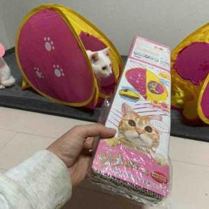 猫テント、増える 20201129