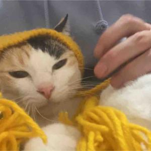 中性的美少年猫 20210118
