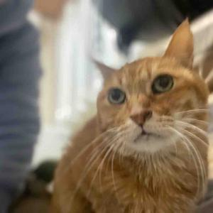 猫の介護 20210120