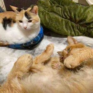 おっちゃん猫と王子様猫 20210121