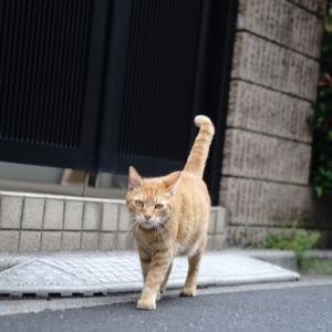 夏に会えた猫たち 20210730