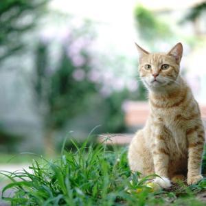 外猫をミラーレスカメラで撮る 20210731