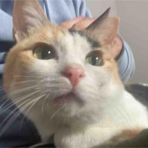 深窓の王子様猫 20210905