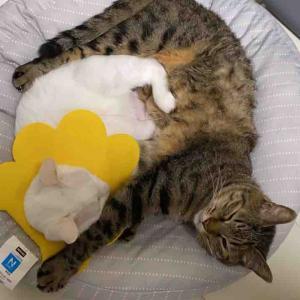 我が家の変わり猫団子 20210908