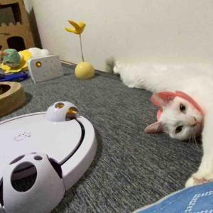 猫の試練、壊れる 20210917